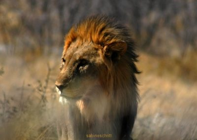 namibia-084-bearb